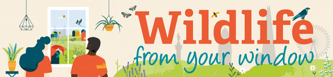 Wildlife from your window banner image
