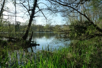 Denham Lock Wood SSSI