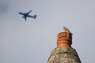 Kestrel and aeroplane over London