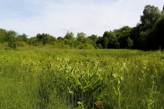 Frays Island and Mabey's Meadow