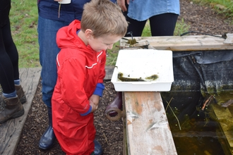 Child looking into pond dipping tray at Walthamstow Wetlands