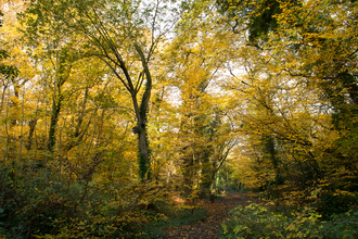 Trees leaves turning yellow in sydenham hill wood