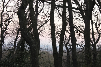 view through trees to London skyline