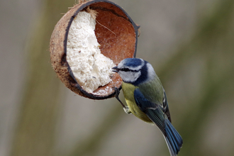 Gillian Day - blue tit on feeder