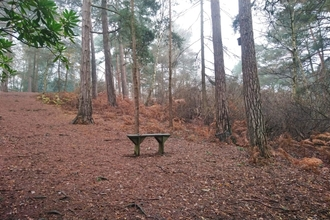 Bench at Coombe Wood Gardens