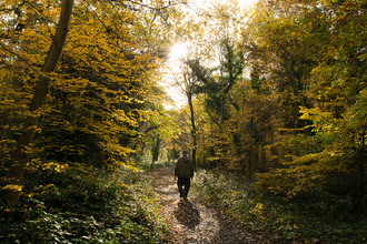 Volunteer walking through Sydenham Hill Wood in autumn