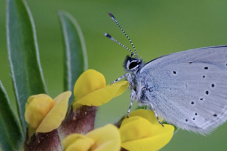Butterfly identification and monitoring workshop