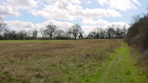 Totteridge Fields