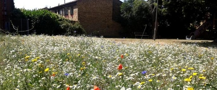 Natural Estates wildflower meadow