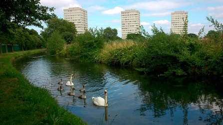View at Woodberry Wetlands