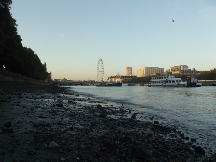 Westminster riverbank