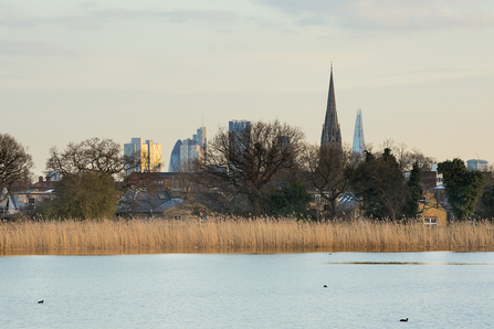 Woodberry Wetlands © Penny Dixie