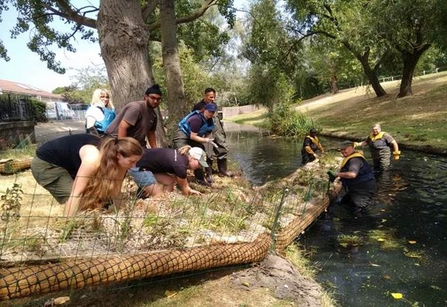 Volunteers helping to install a floating reedbed