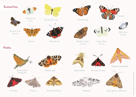 butterfly and moth spotter sheet