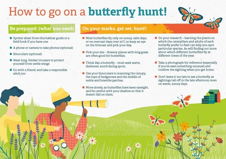 How to go on a butterfly hunt poster