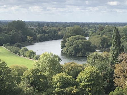 View of Thames atop Terrace Gardens, Richmond