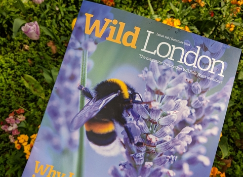 Wild London Magazine Cover Summer 19