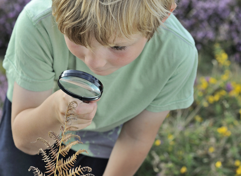 Boy searching for bugs using magnifying glass